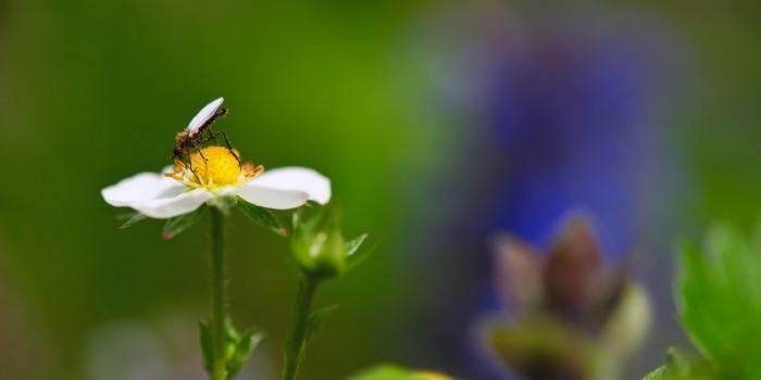 """""""Zarte Schönheit im Pollenkleid"""" – (Bild 0009)"""