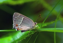 """""""Anmutiger Schmetterling im Sonnenbad"""" – (Bild 0013)"""