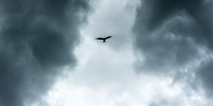 """""""Himmelsbote"""" – (Bild 0022)"""