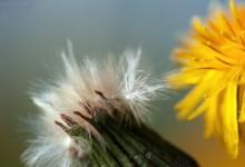 """""""Von der Blüte zur Reife"""" – (Bild 0036)"""