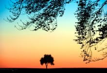 """""""Einsamer Baum in farbenfroher Abendstimmung"""" – (Bild 0087)"""