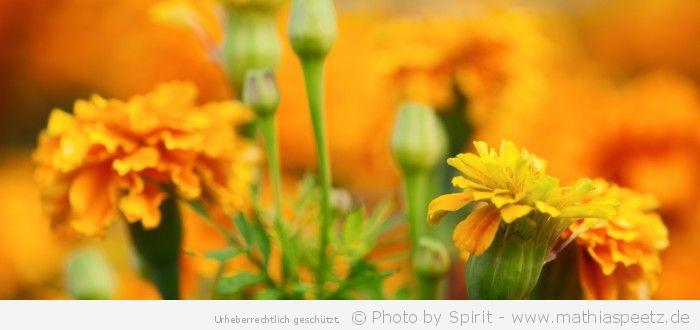 """Blumengemälde in grün-gelb-orange"" – (Bild 0148)"
