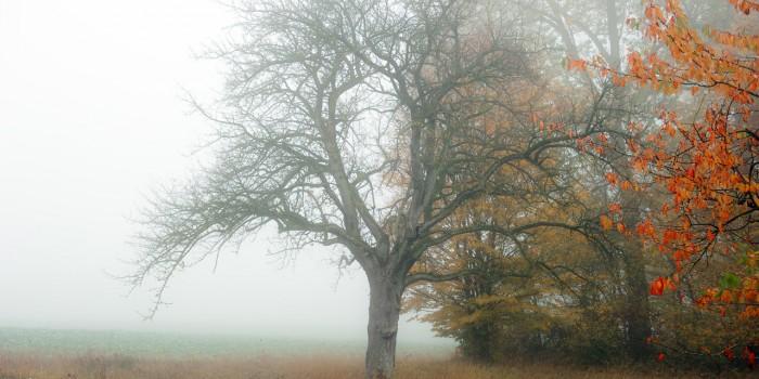 """Vom Nebel zum bunten Blatt"" – (Bild 0157)"