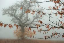 """Herbstblätteräste durchdringen den Nebeltag"""" – (Bild 0150)"""