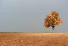 """""""Herbstgold"""" – (Bild 0161)"""