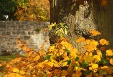 """""""Herbstblätter als Farbpalette"""" – (Bild 0162)"""
