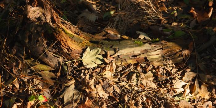 """""""Waldbodenmagie"""" – (Bild 0171)"""
