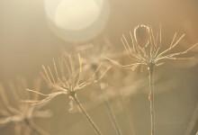 """""""Doldengerippe bei der Sonnenanbetung"""" – (Bild 0166)"""